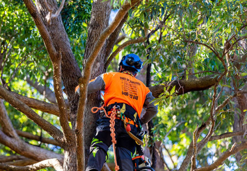 Tree Pruning in Coffs Harbour