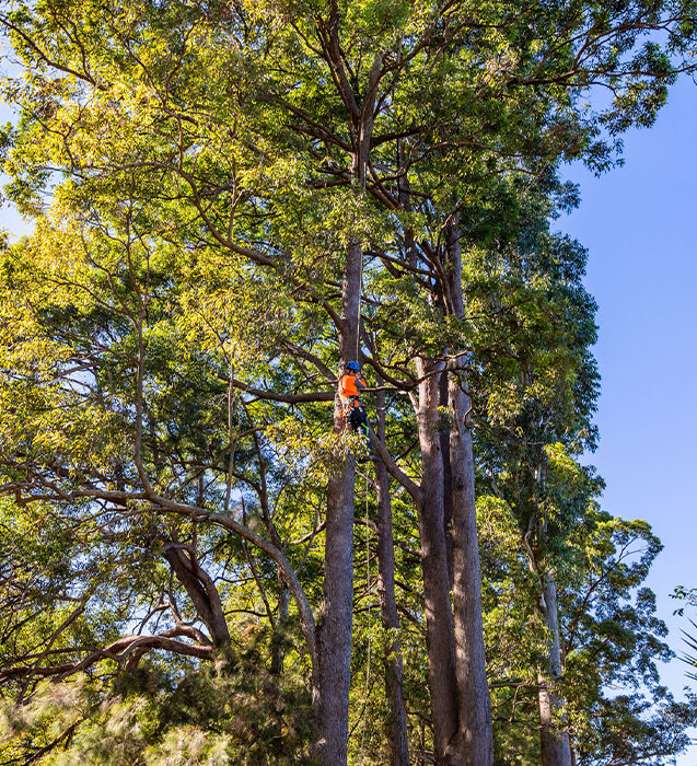 Tree Removal in Coffs Harbour